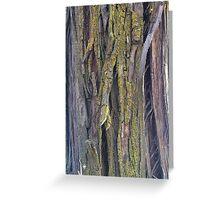 Tree bark/moss Greeting Card
