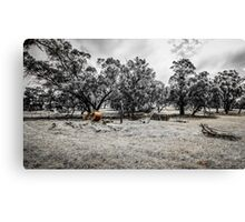 Rural Relics Canvas Print