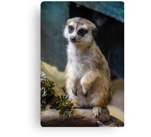 Huh? What'd you Say?? Canvas Print