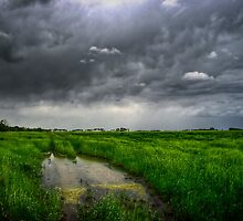 Flooded Trail in Green Field by Myron Watamaniuk