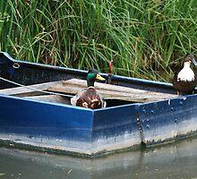 Two boating ducks by Joanne Emery