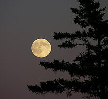 Catch the Moon by Debbie  Roberts