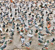 the pigeons2 by henuly1