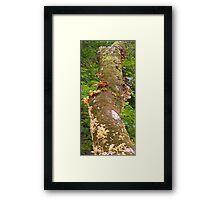Mushroom's Kingdom Framed Print