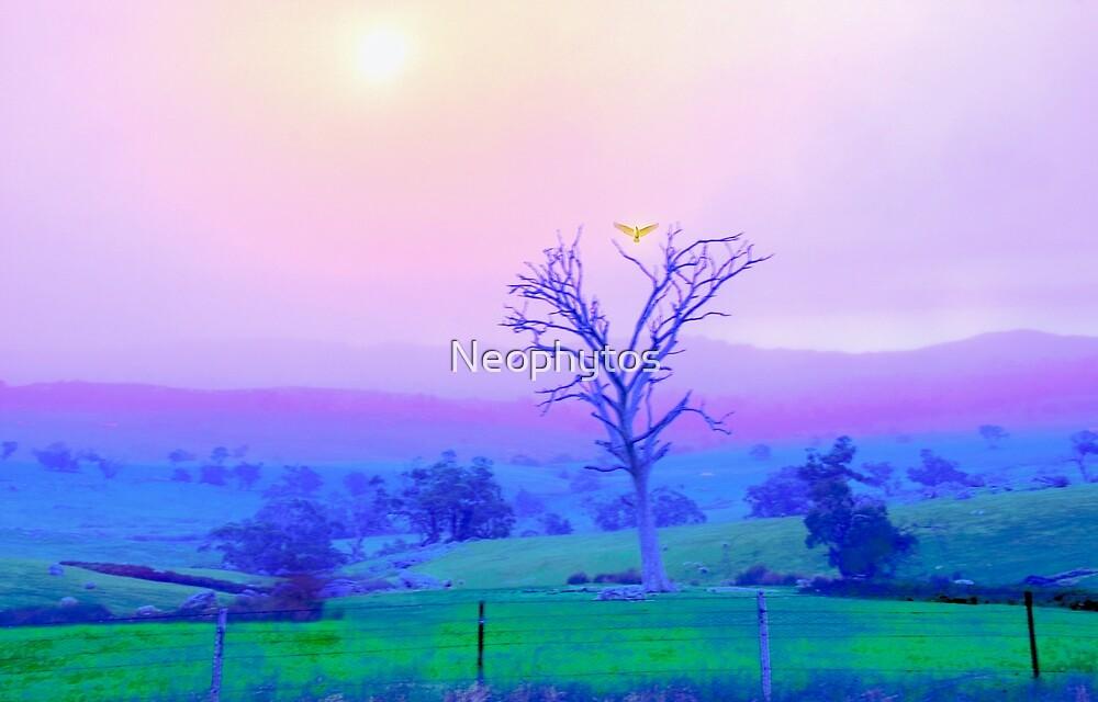 - Cockatoo - by Neophytos