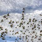 flying birds by henuly1
