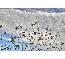 flying birds3 Photographic Print