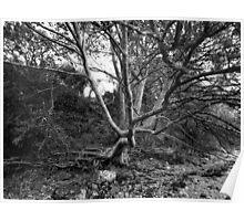 Distressed Tree-Menai Straits, Anglesey Poster
