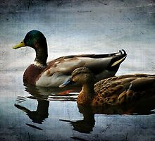 Out for an Afternoon Swim by Mattie Bryant