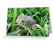 Hidden Hopper Greeting Card