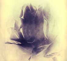 Rose - Impressions # 4 by Ronny Falkenstein
