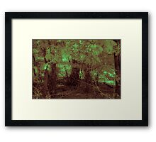 Forest Gloom Framed Print