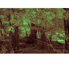 Forest Gloom Photographic Print