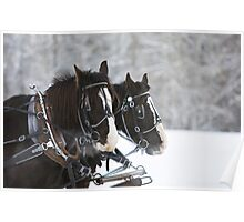 Wagon Horses in the Snow Poster