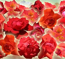 Red Roses by STHogan