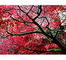 Orient ~ Westonbirt Photographic Print