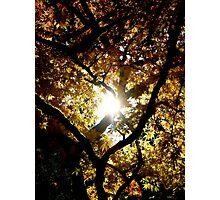 Shine ~ Westonbirt Photographic Print