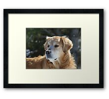 Something Has His Attention! Framed Print