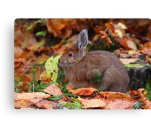 Snowshoe Hare in Autumn  Canvas Print