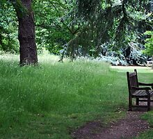 Bench by the River Thames, Kew Gardens by Joanne Emery
