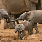 Pachyderm Pals by naturalnomad