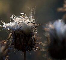 Wisps of Beauty by Sue  Cullumber