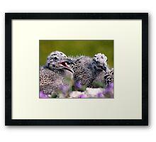 chick Framed Print