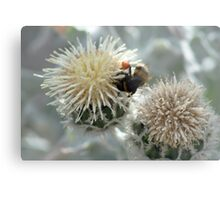 Bumble Bee harvesting pollen on flowers Metal Print
