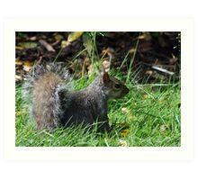Grey squirrel at Kew Gardens Art Print