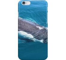 humpback whale at Hervey Bay, Queensland iPhone Case/Skin