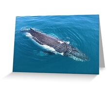 humpback whale at Hervey Bay, Queensland Greeting Card