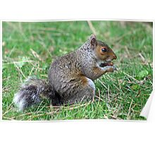 Squirrel - Kew Gardens Poster