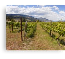 Kelowna vines Canvas Print