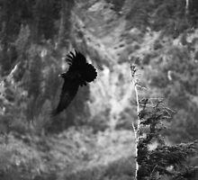 Freedom Flight by Cami Hagen