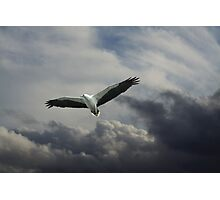 Ruler of the Skies Photographic Print