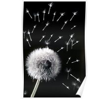 Dandelion Clock and Spores Poster