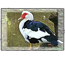 """Being born in a duck yard does not matter, if only you are hatched from a swan's egg.""""  Photographic Print"""