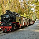 "MVP81 The ""Molli"" steam train in Bad Doberan, Germany. by David A. L. Davies"