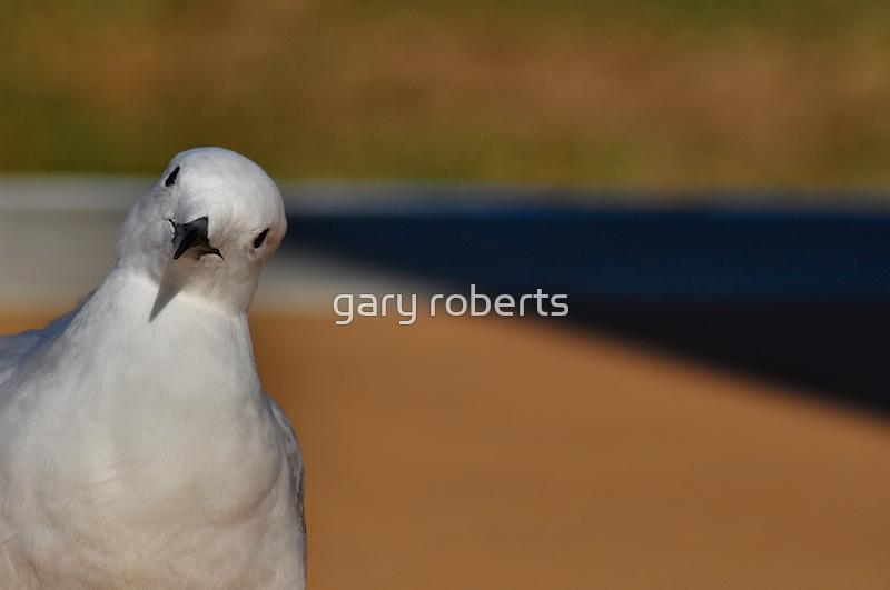 looking at you, looking at me by gary roberts