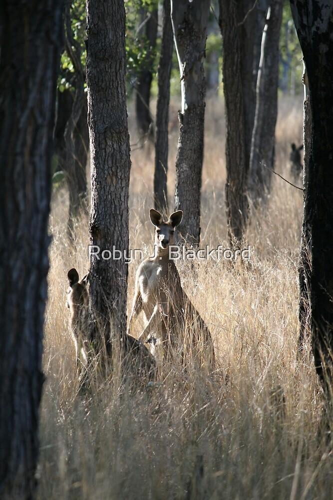 Kangaroos on Alert in the Bush by aussiebushstick