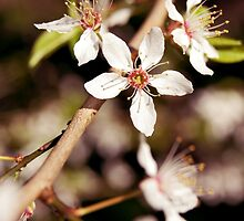 Blossom 2 by Natalie Broome