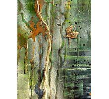 Last Tree Photographic Print