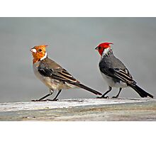 Mr. and Mrs. Bird Photographic Print