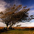 Windswept trees by Lorraine Parramore
