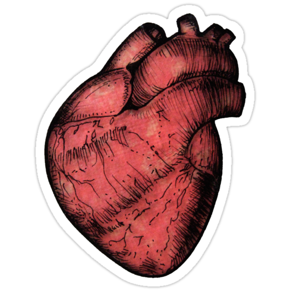 Anatomical Heart - Red Sticker by Squidy