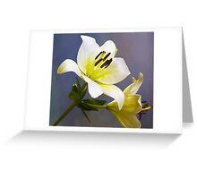white lily flower abstract backgroung Greeting Card