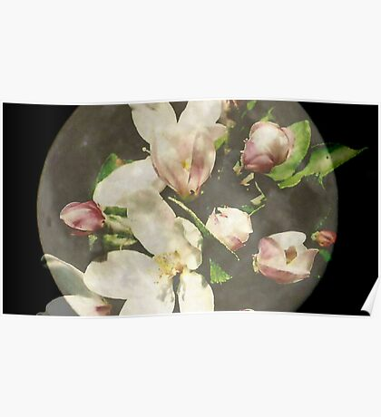 apple blossoms on moon Poster