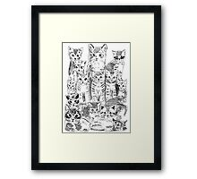A bunch of cats Framed Print