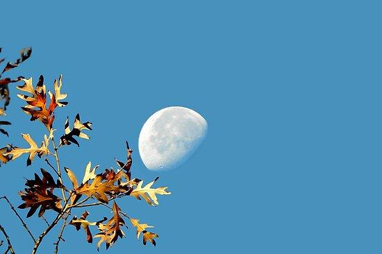 Autumn Peace by NatureGreeting Cards ©ccwri