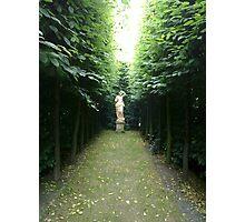 Leafy Corridor - N900 Photographic Print